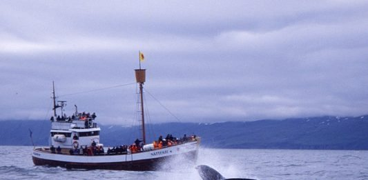 Whale Watching - Walbeobachtung